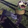 Photo #4 - Slinky Dog