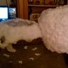 Photo #6 - Snowman
