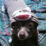 Photo #2 - Sock Monkey