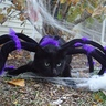 Photo #1 - Simon the Spider