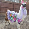 Photo #1 - My llama Twist is modeling the Spring Flowers costume