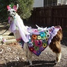 Photo #2 - My llama Twist wearing Spring Flowers made for him.