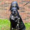 Photo #4 - Darth Vader Diego