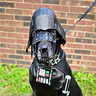 Photo #5 - Darth Vader Diego