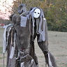Photo #1 - Stilt Spirit