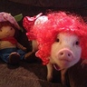 Photo #1 - Penelopi the Pig as Strawberry Shortcake