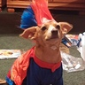 Photo #6 - Peanut as super man
