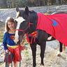 Photo #1 - Super Horse