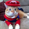 Photo #1 - Super Mario Cat