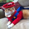 Photo #3 - Super Mario Cat