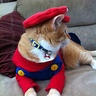 Photo #4 - Super Mario Cat