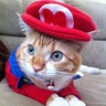 Photo #5 - Super Mario Cat