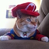 Photo #6 - Super Mario Cat