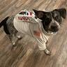 Photo #3 - Nasa Pup!