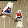 Photo #2 - Super Parrot and Wonder Bird