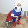 Photo #1 - Superman
