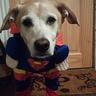 Photo #1 - Brody as superman