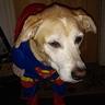 Photo #3 - Superman