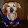 Photo #4 - Superman