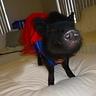 Photo #2 - Superwoman Pig