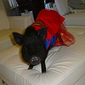Photo #1 - Superwoman Pig