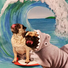 Photo #2 - Pug and Shark:  The Dynamic Duo