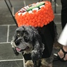 Photo #6 - Sushi Roll Dogs