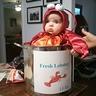 Photo #5 - Sweet Little Lobster