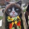Photo #1 - Taco Cat