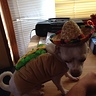 Photo #4 - Taco chihuahua