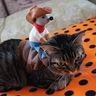 Photo #8 - Azuki the Rodeo Cat