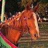 Photo #2 - Teddy the Carousel Horse