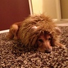 Photo #4 - Lion
