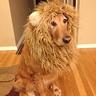 Photo #2 - Lion