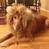 Photo #3 - Lion