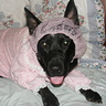 Photo # - The Big Bad Wolf in Grandmother's Clothing