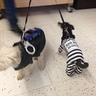 Photo #2 - Choupette and Leyla