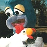 Photo #8 - Gonzo & Chicken
