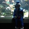Photo #2 - Captain Barnacles from the Octonauts