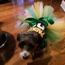 Photo #2 - I'm a Packers fan so Clemmie's a Packers fan!