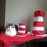 Photo #2 - Photo #2: Pixie chillin' with The Hats for Cats