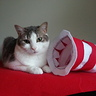 Photo #3 - Photo #3: Pixie showing how the Brim of the Cat in the Hat  is Sewn