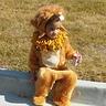 Photo #5 - lion