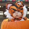 Photo #2 - Tiger Baby