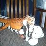 Photo #3 - iguana tiger