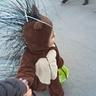 Photo #3 - Toddler Porcupine