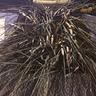 Photo #5 - Toddler Porcupine