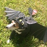 Photo #2 - Khaleesi as Toothless