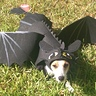 Photo #1 - Khaleesi as Toothless