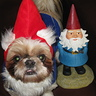 Photo #4 - Travelocity Gnome